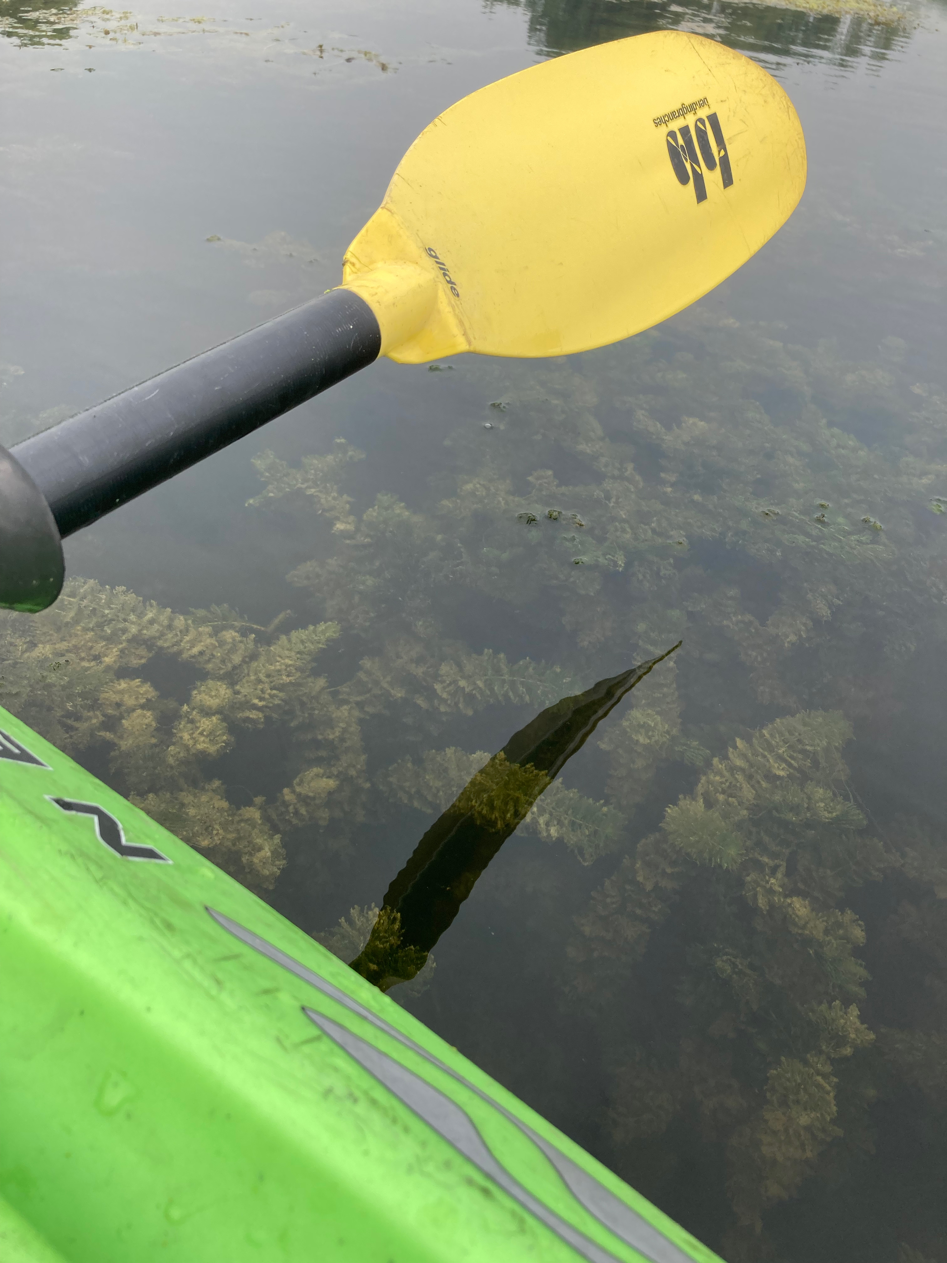 an oar overlooking lake water with green plant life